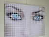blu-eyes-1